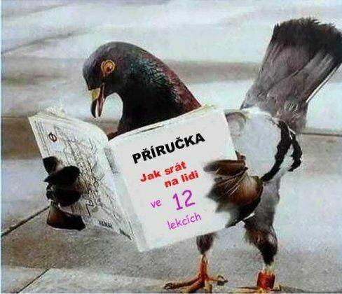 Příručka pro holuby